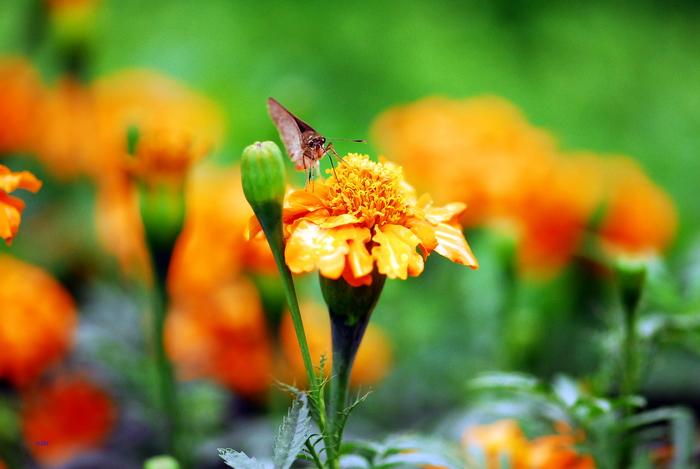 flower-74.jpg