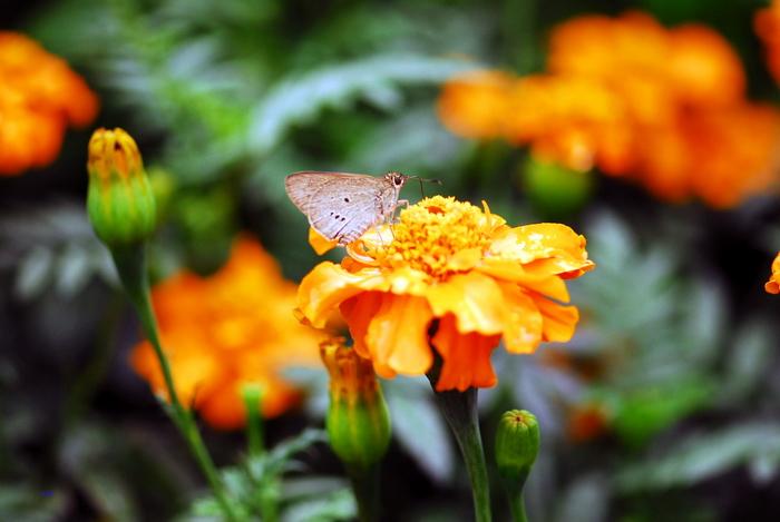 flower-76.jpg