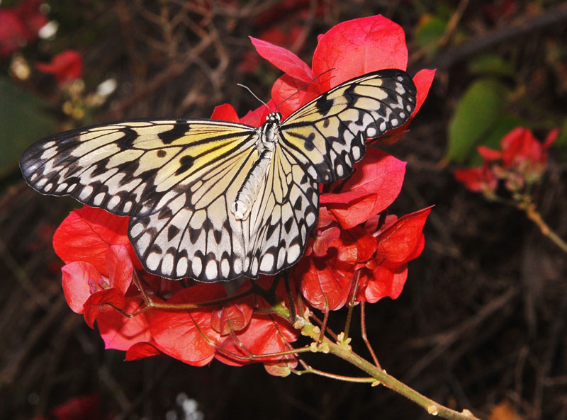 Butterfly Loving the Flowers