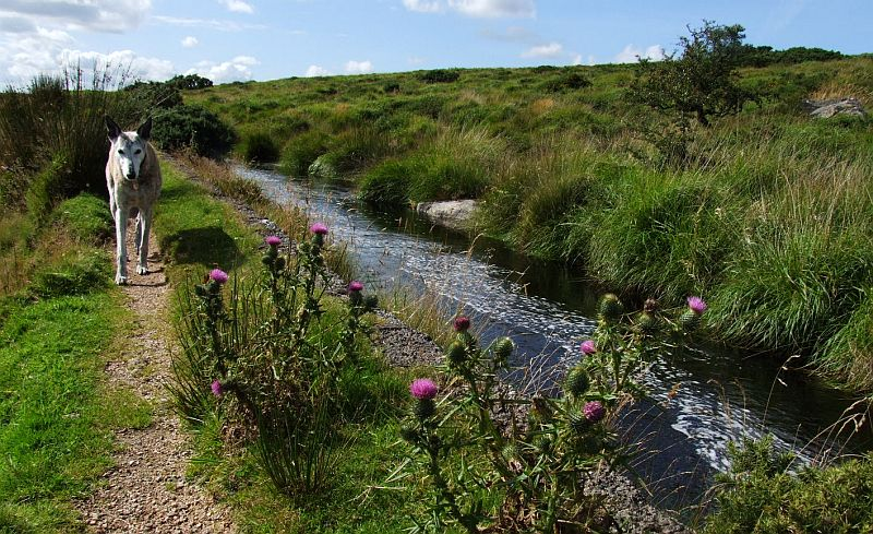 Along the Leat