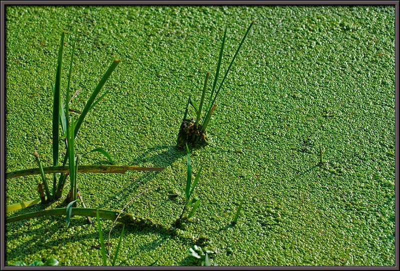 Textures... reeds... serenity