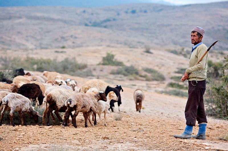 Shepherd - Semnan
