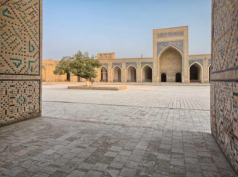 Tree in Kalon Mosque courtyard - Uzbekistan