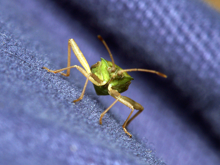 Bug on Pants.jpg