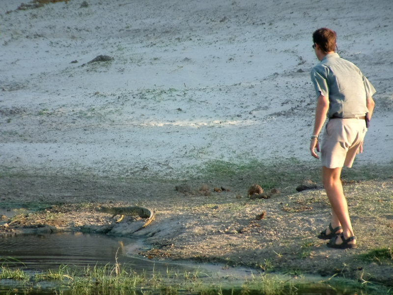 Our guide Dave attempting (unsuccessully) to catch a young crocodile