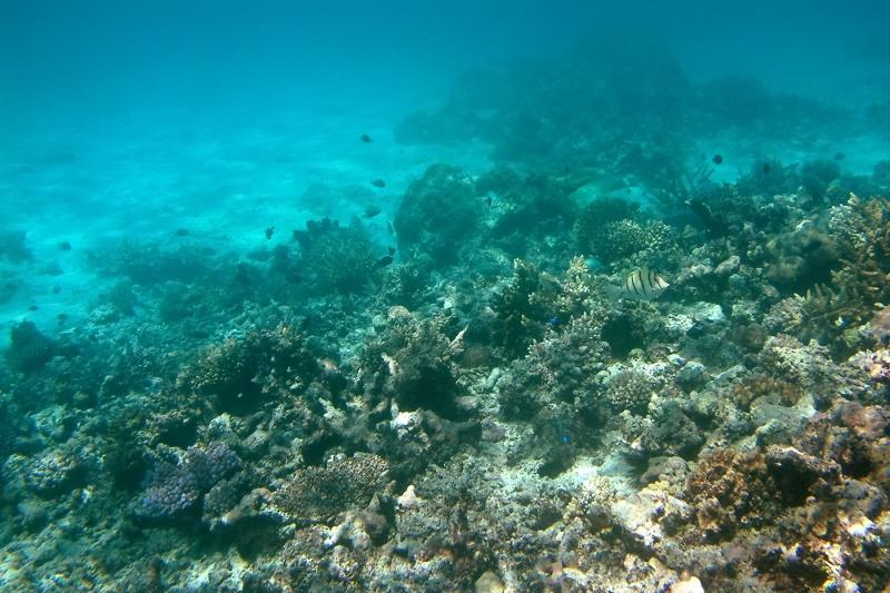 Reef between Mounu and Ovalu Islands