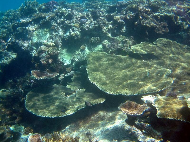 Several types of coral near Mounu Island