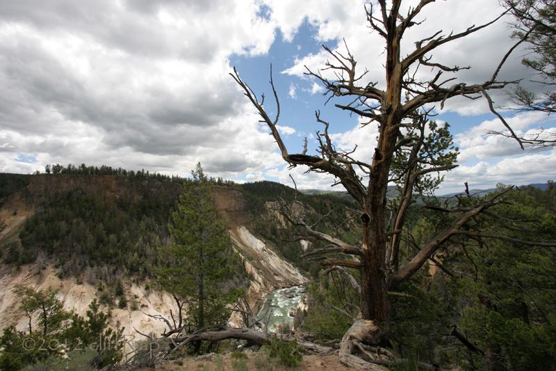 Yellowstone Picnic Area