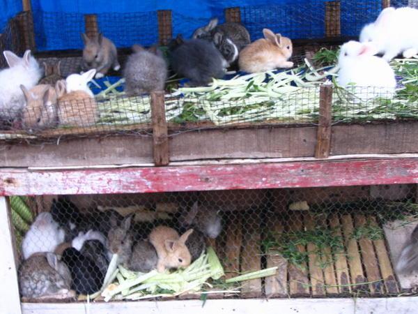 Cisarua - hopefully for pets, not dinner