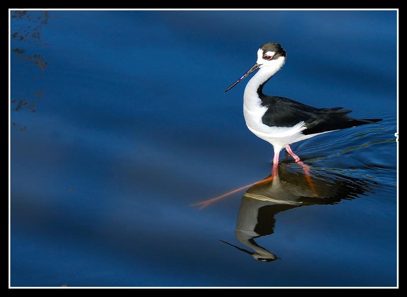 Stilt bird