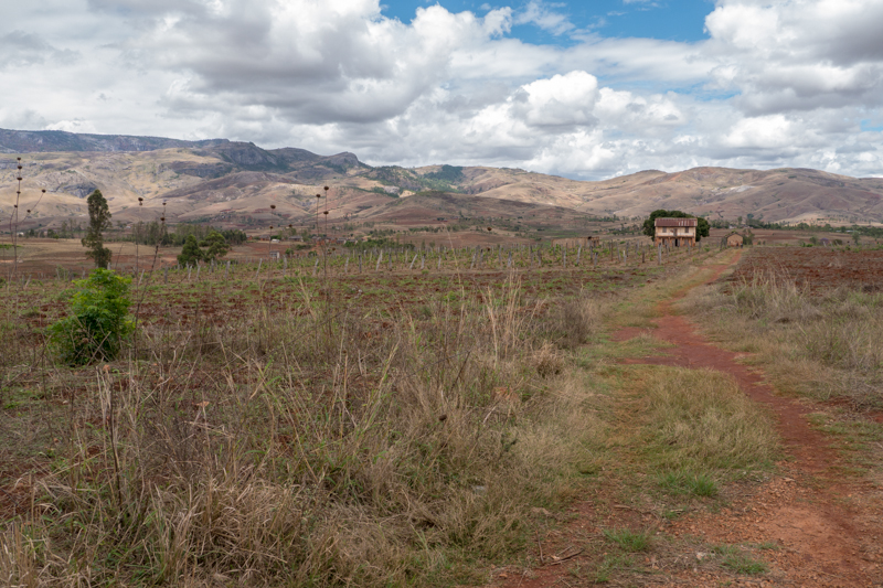 Vineyard in Madagaskar