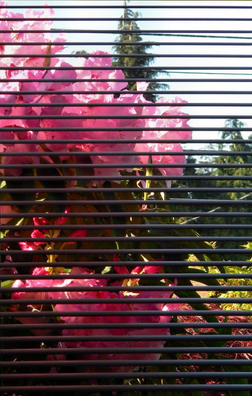 Color, blinds.