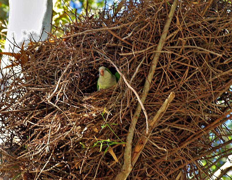 parrot nest2.JPG