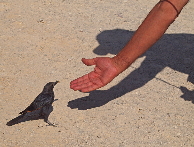 PB212470_bird mike_800.jpg