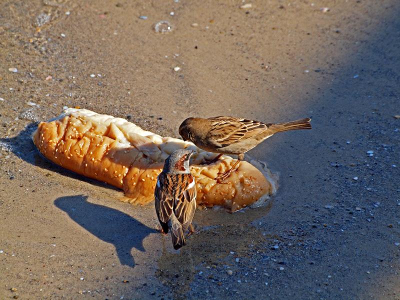P1020460_2sparrows bread.jpg