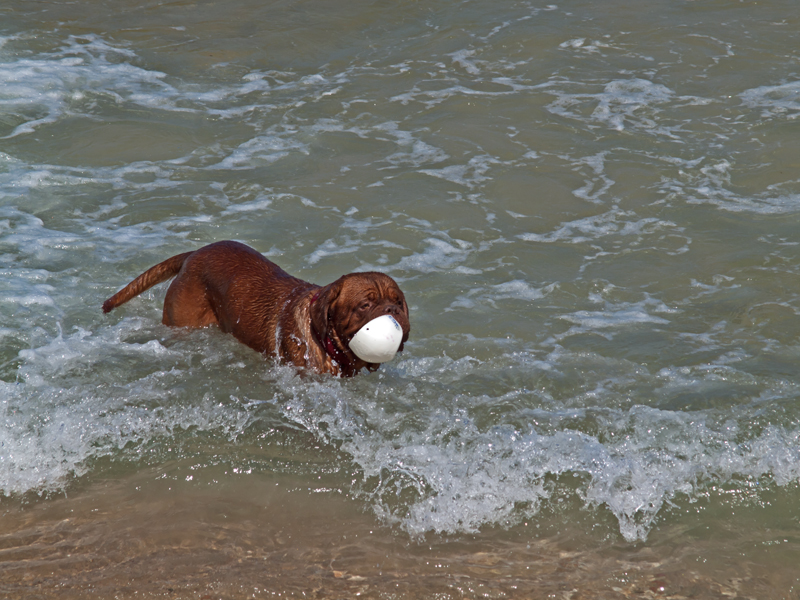 P6182212_dogball.jpg