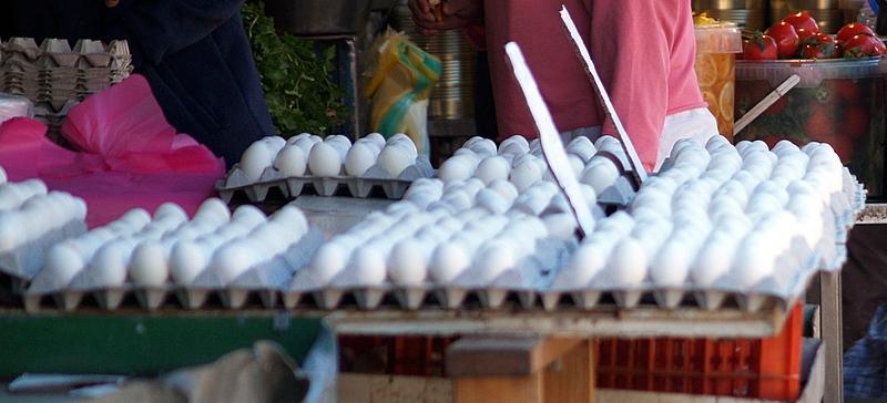 egg trays.JPG