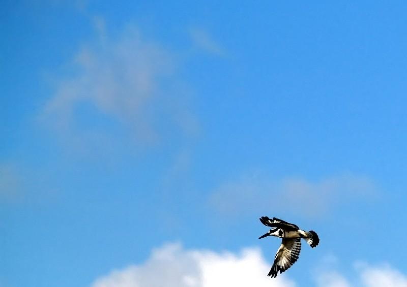 bird namal2.JPG