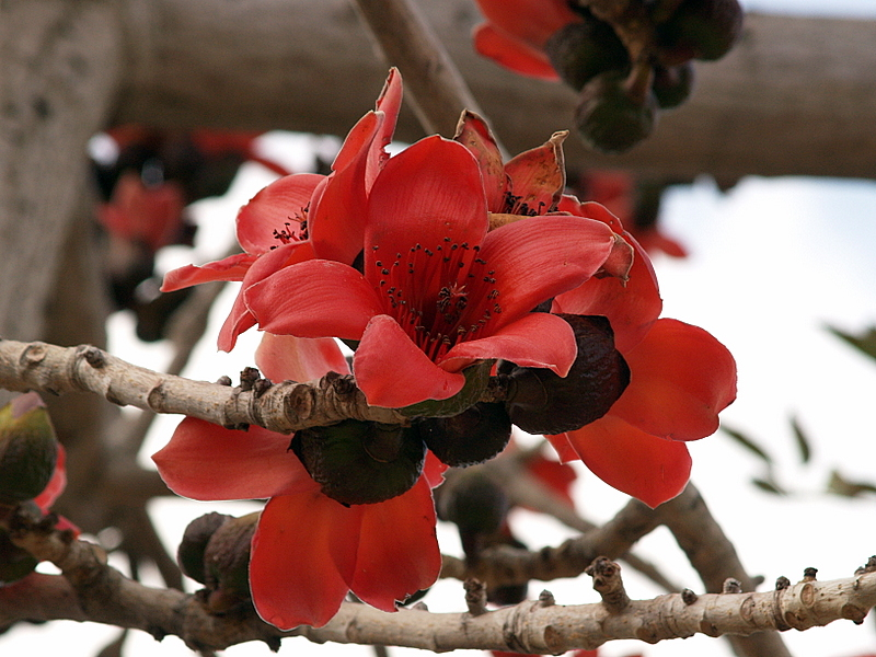 red flower kikar rabin.JPG