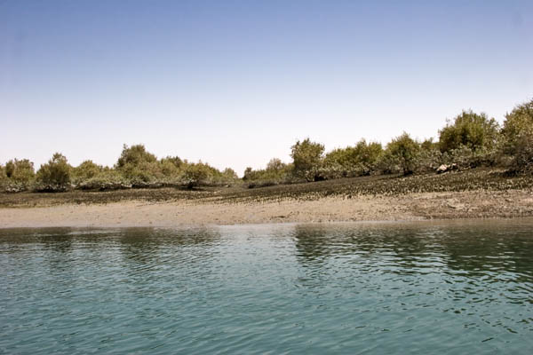 Harra Forests