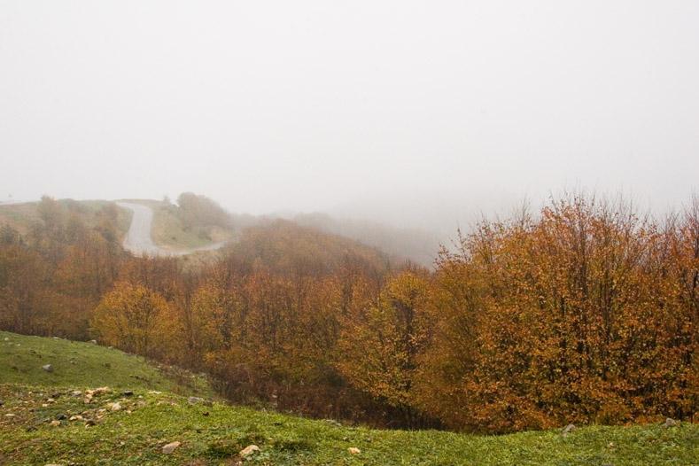 Deylaman Forests