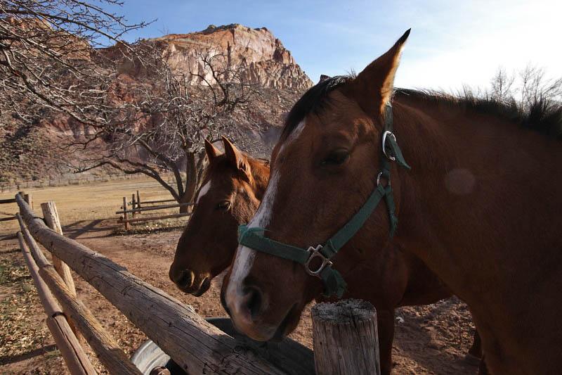 Horses at Fruita area