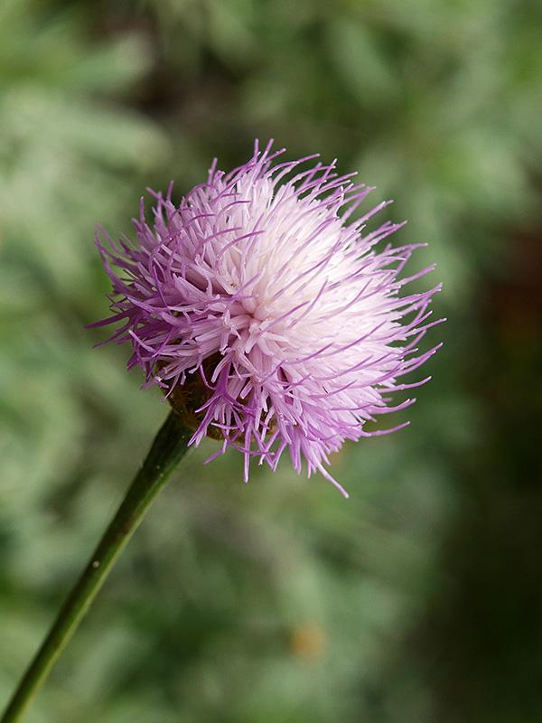 Florecilla / Small flower