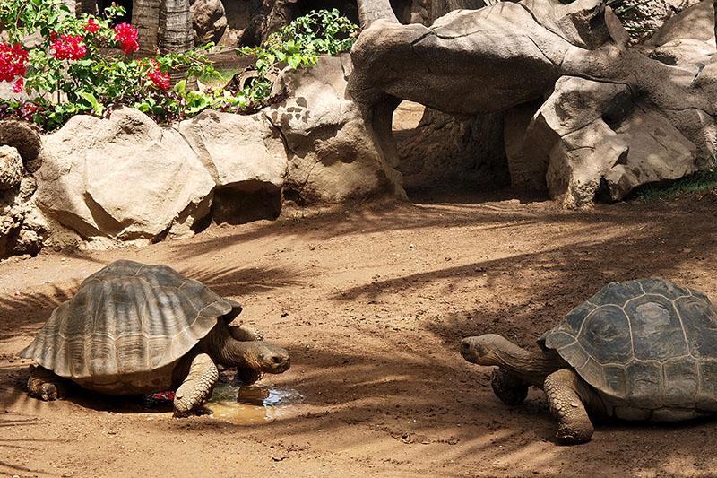 Algunos animales buscan pelea / Some animals look for fight