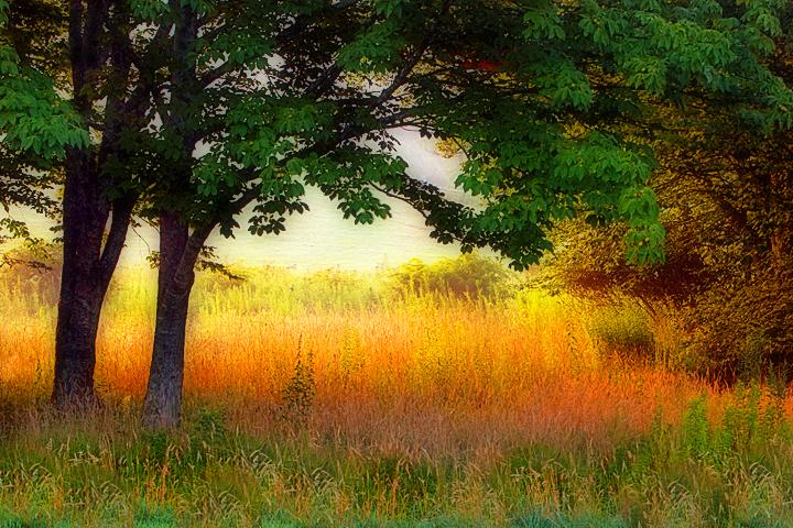 Light in the Meadow.jpg