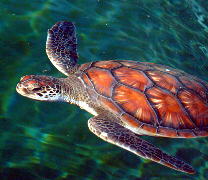 sea turtle 2 jpg photo timmoore photos at