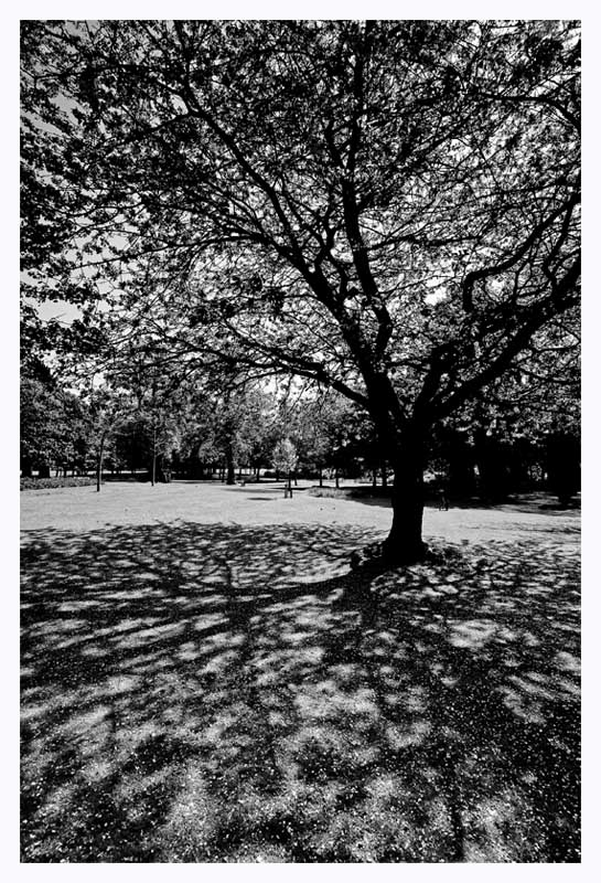 Tree-mendous Shadows