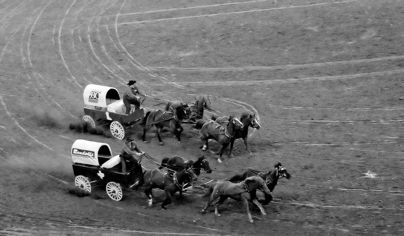 Houston Rodeo<br>Chuck Wagon Racing!
