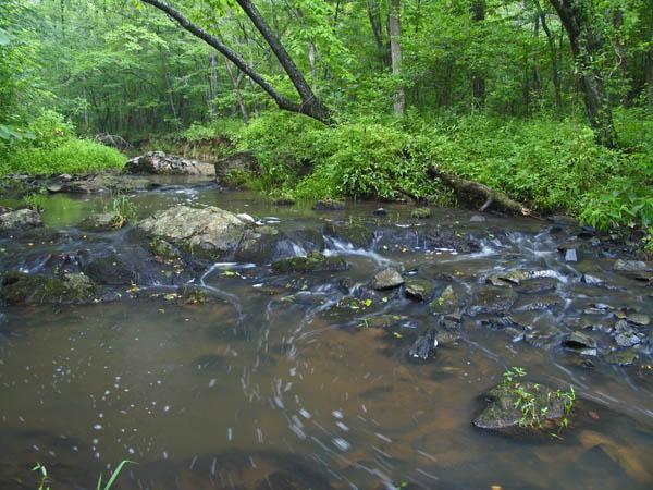 Dial Creek looking upstream
