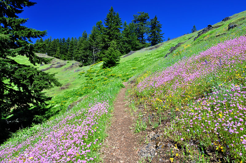 Tire Mountain Trail, Study 2011-4