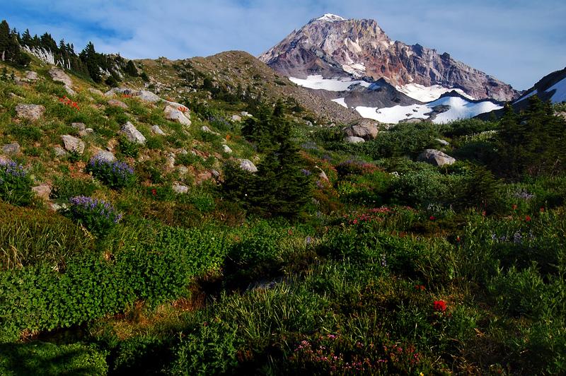 Glisan Creek Wildflowers, Study #1