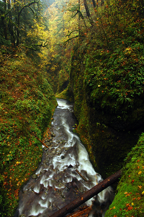 Oneonta Gorge Overlook #2