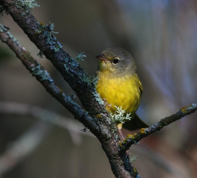 Quiz_Bird_2