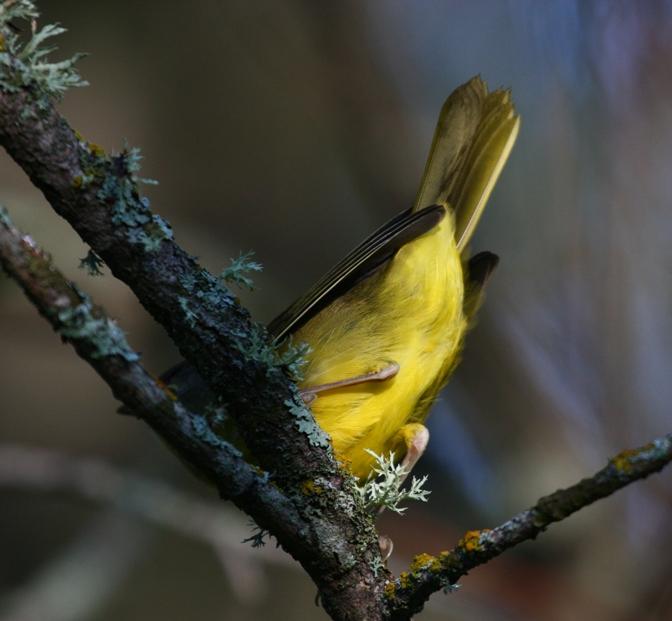 Quiz_Bird_2c