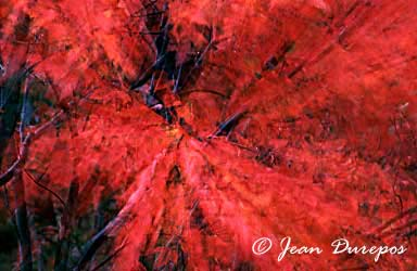 Red Profusion