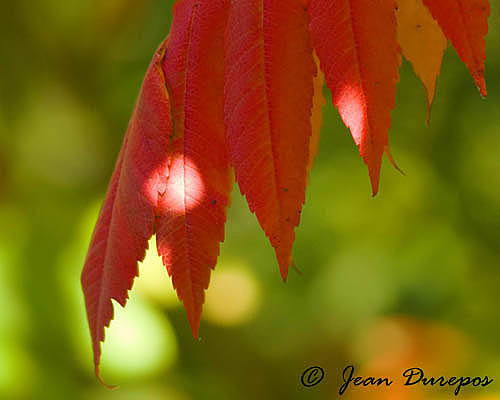 A touch of fall