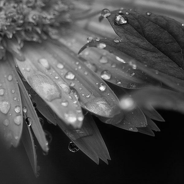 T Tears of Autumn