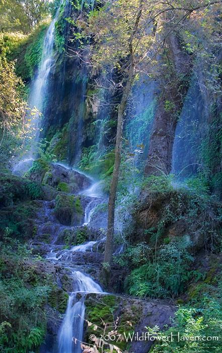 Main Falls - 2007