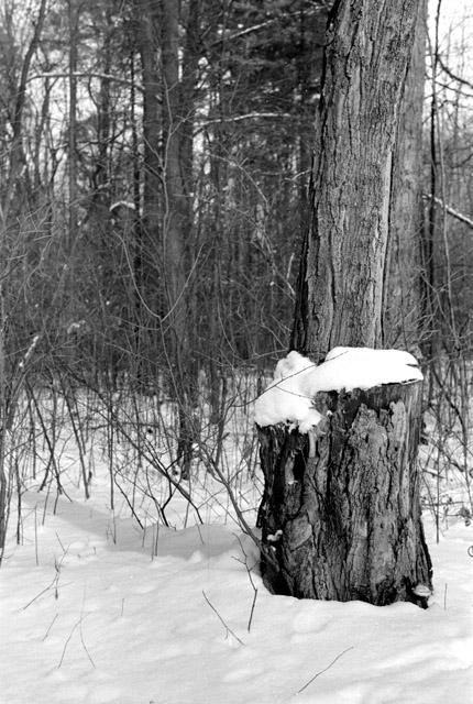 snow_stump.jpg