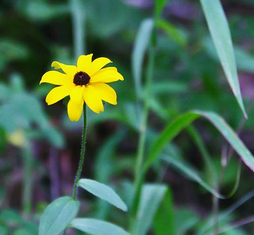 Creek Flower