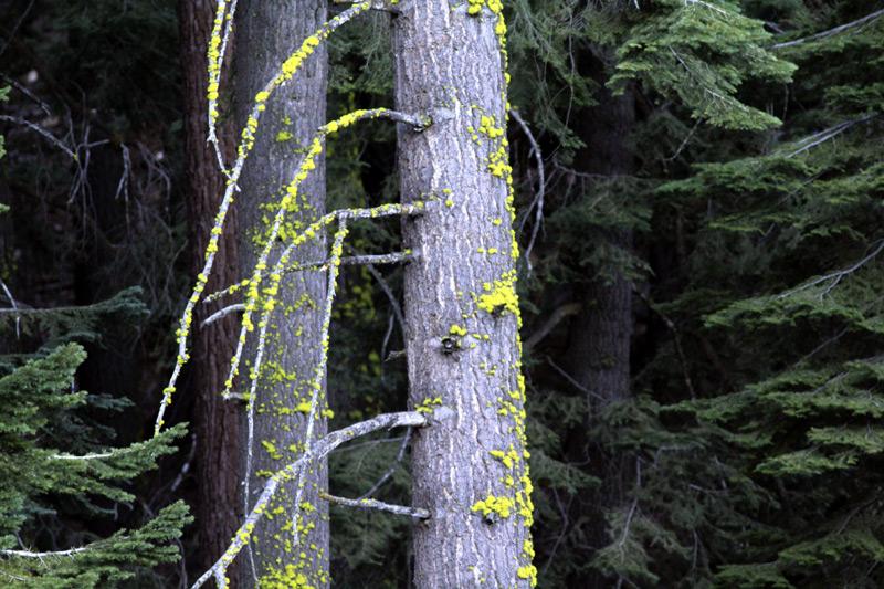 Trees-in-Yosemite-8.jpg