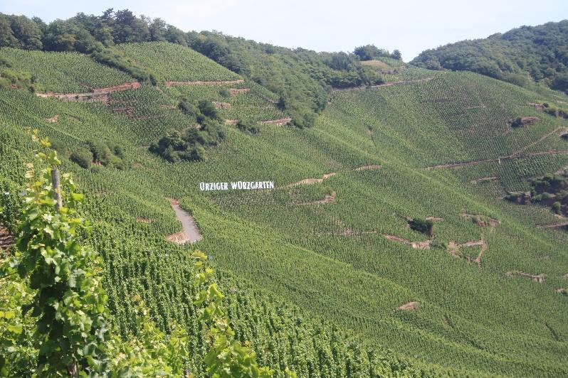 Famous vineyard of Mosel area (Ürziger Würzgarten)