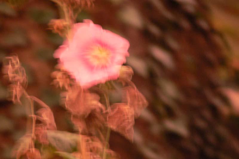 01.02.2007