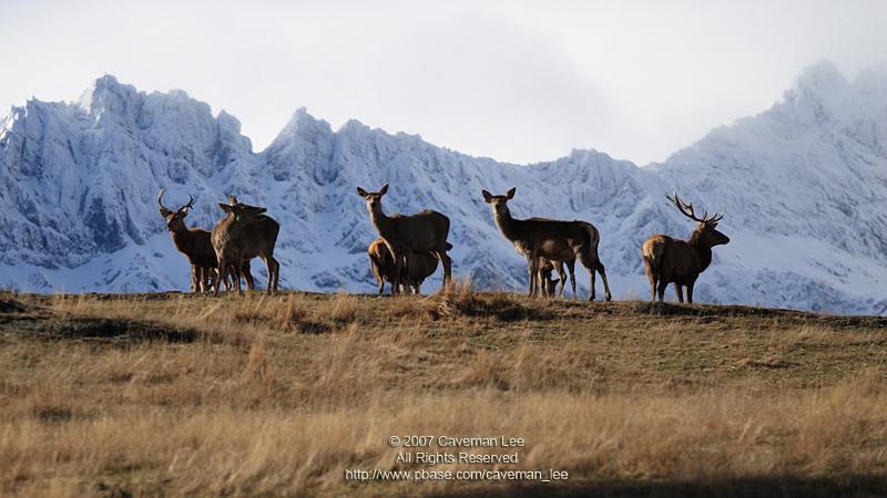 Band of deers