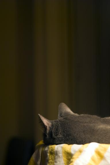 Janeys Ears