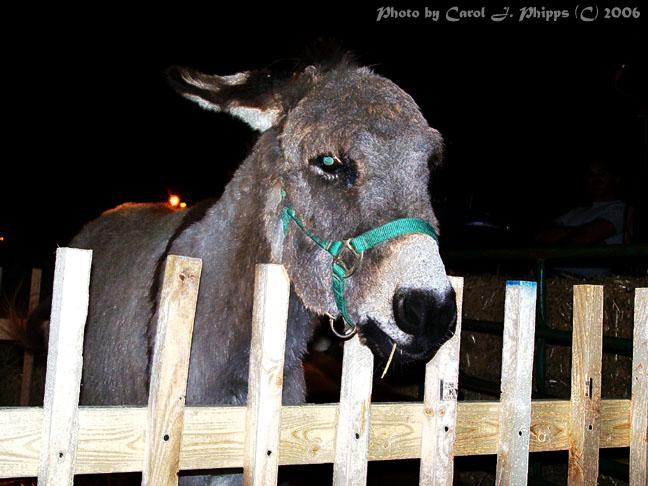 Lil Donkey.